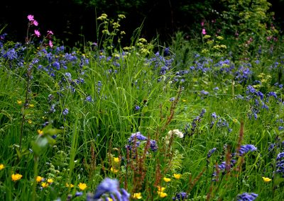 Wild Meadow, Abbotsbury, Dorset